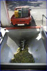 The grapes are 'snailed' in to the separator