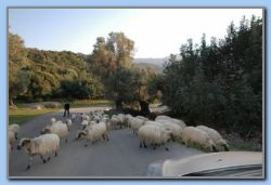 1. April. Goats and the herdsman (1)