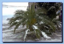 Freezing palm.
