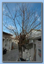 Kokkari, Tree waiting for summer
