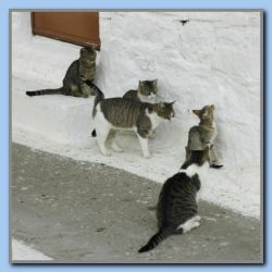 Cats in Agh. Christodoulos
