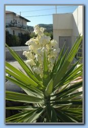 Palm tree with flowers