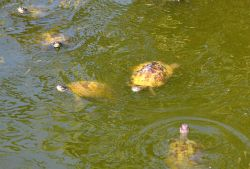 03_Potokaki_Turtles