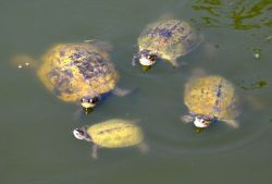 05_Potokaki_Turtles