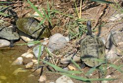 07_Potokaki_Turtles