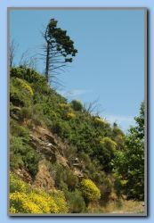 Flowering mountainside by Mesogio