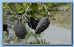 Almonds from last year.