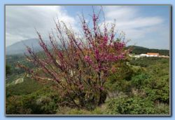 Spring with flowers and flowering trees