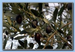and olives.